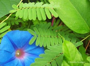 Eden Project - tropical flower