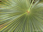 Eden Project - tropical plant