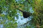 Yarra - terminte nest