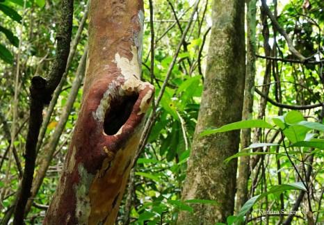 Yarra - trees