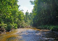 Yarra - river (2)