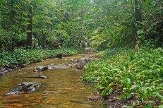 Yarra - river (3)