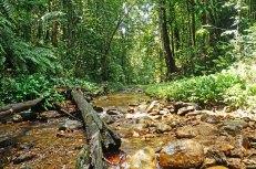 Yarra - river (4)