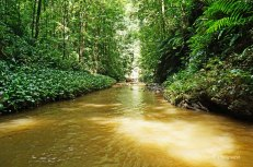Yarra - river (6)