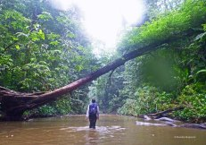 Yarra - river (8)