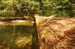 Cathedral Grove - pathways (1)
