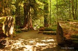 Cathedral Grove - pathways (3)