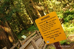 Cathedral Grove - signs (3)