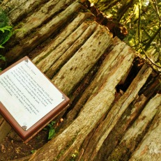Cathedral Grove - vandalized trees (1)