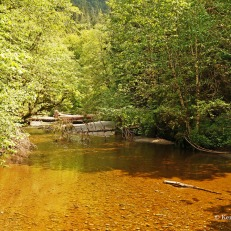 Cathedral Grove - water (1)