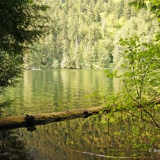 Cathedral Grove - water (2)