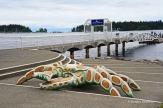 Nanaimo harbour - strange crab