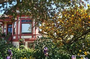 Victoria - Birdcage Walk (homes) (5)