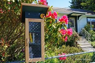 Victoria - Birdcage Walk (homes) (6)