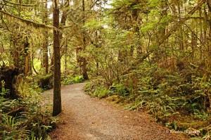 Wild Pacific Trail (1)