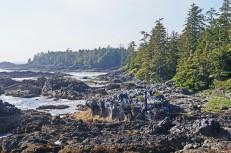 Wild Pacific Trail (12)