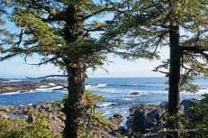 Wild Pacific Trail (13)