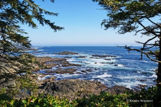 Wild Pacific Trail (17)