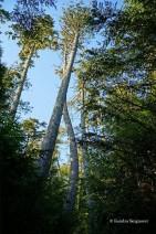 Wild Pacific Trail (18)