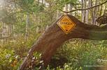 Wild Pacific Trail (24)