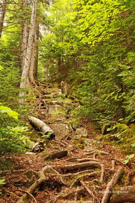 Adirondacks - trail