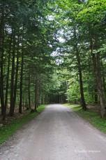 Easy groomed trail
