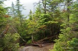 Adirondacks trail